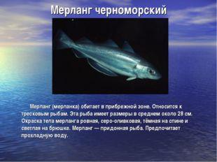 Мерланг черноморский Мерланг (мерланка) обитает в прибрежной зоне. Относится