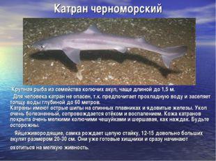 Катран черноморский Крупная рыба из семейства колючих акул, чаще длиной до 1,