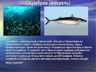 Скумбрия (макрель) Скумбрия — мигрирующая стайная рыба. Заходит в Чёрное море