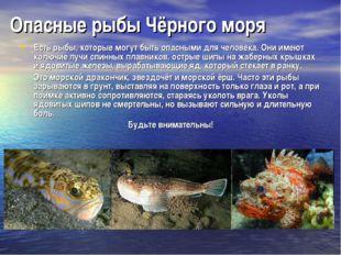 Опасные рыбы Чёрного моря Есть рыбы, которые могут быть опасными для человека