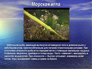 Морская игла Небольшая рыба, имеющая вытянутое игловидное тело и длинное рыл