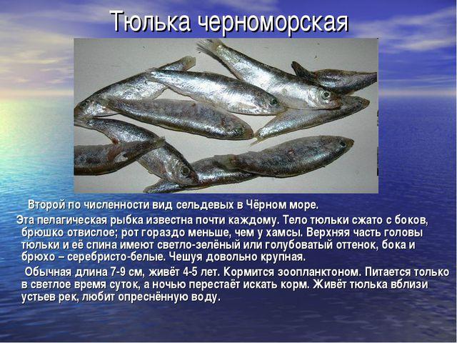 Тюлька черноморская Второй по численности вид сельдевых в Чёрном море. Эта пе...