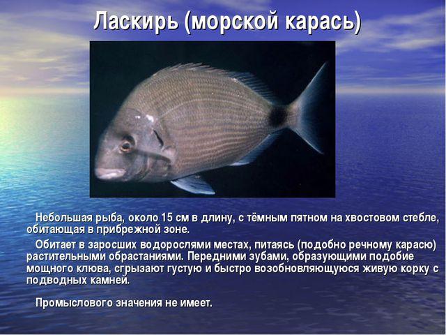 Ласкирь (морской карась) Небольшая рыба, около 15 см в длину, с тёмным пятном...