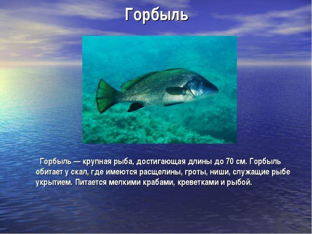 Горбыль Горбыль — крупная рыба, достигающая длины до 70 см. Горбыль обитает у...