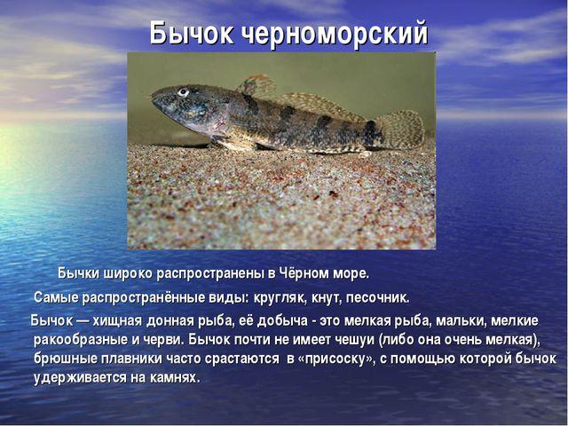 Бычок черноморский Бычки широко распространены в Чёрном море. Самые распростр...