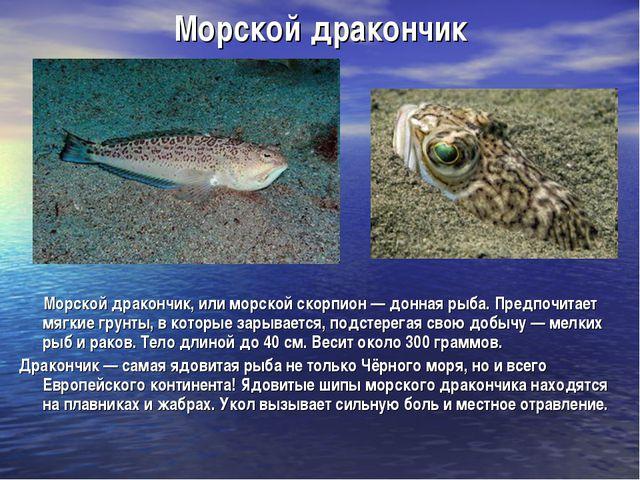 Морской дракончик Морской дракончик, или морской скорпион — донная рыба. Пред...