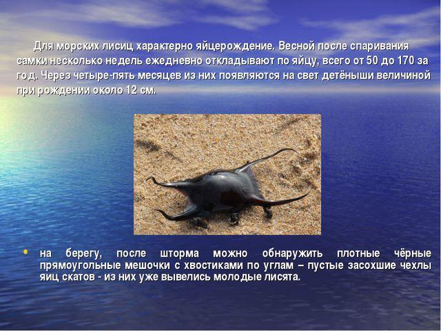 Для морских лисиц характерно яйцерождение. Весной после спаривания самки нес...