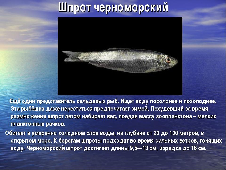 Шпрот черноморский Ещё один представитель сельдевых рыб. Ищет воду посолонее...
