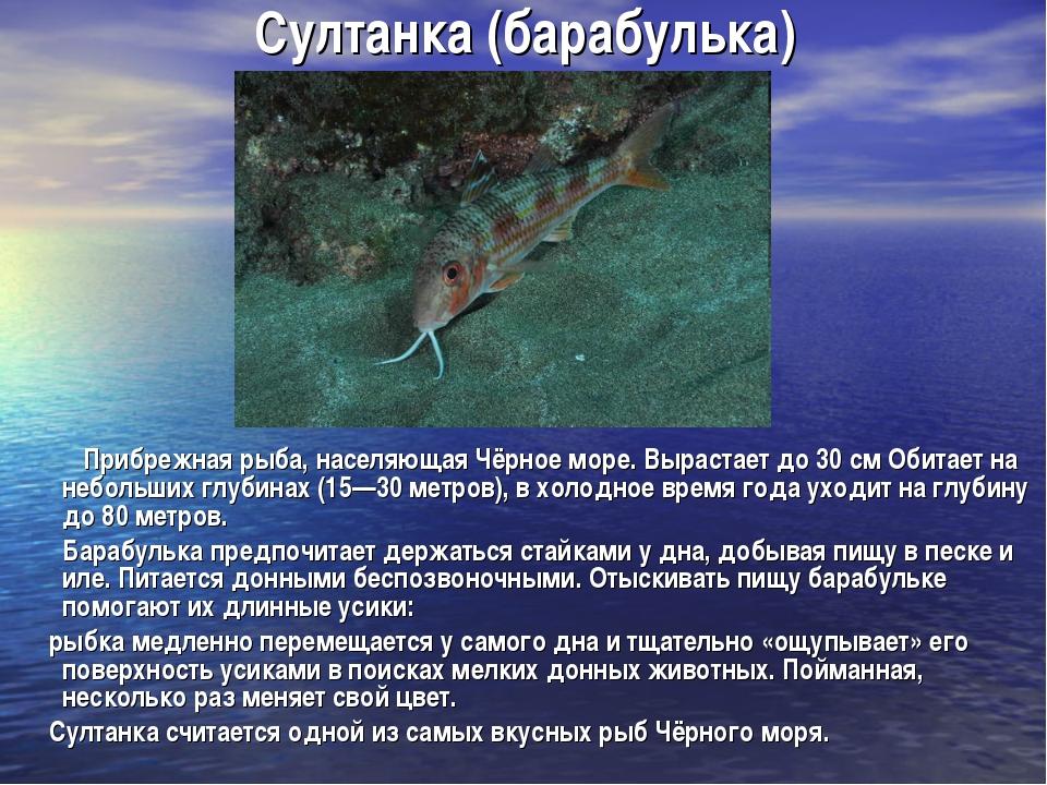 Султанка (барабулька) Прибрежная рыба, населяющая Чёрное море. Вырастает до 3...