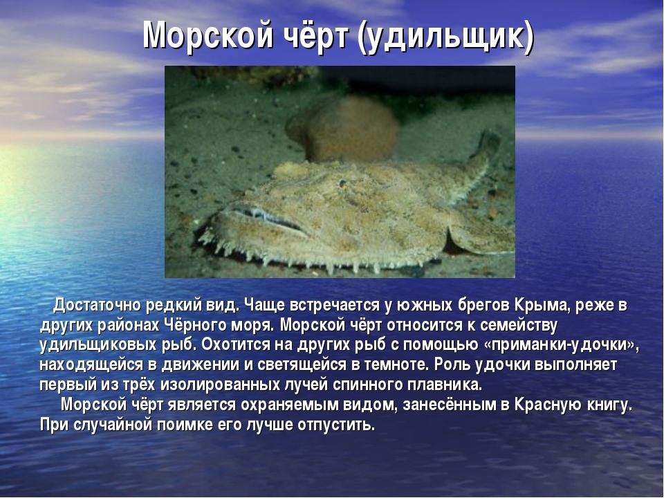 Морской чёрт (удильщик) Достаточно редкий вид. Чаще встречается у южных брего...