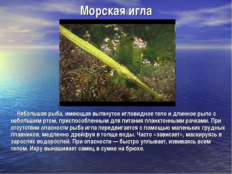 Морская игла Небольшая рыба, имеющая вытянутое игловидное тело и длинное рыл...