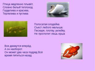 Птица медленно плывёт, Словно белый теплоход. Горделива и красива, Терпелива