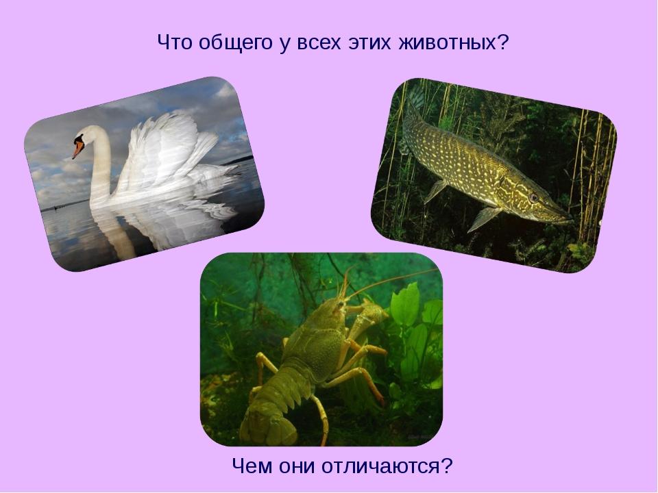 Что общего у всех этих животных? Чем они отличаются?