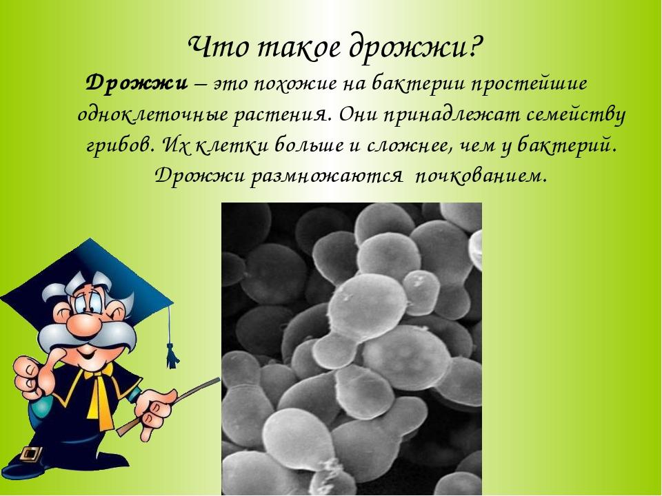 Что такое дрожжи? Дрожжи – это похожие на бактерии простейшие одноклеточные р...