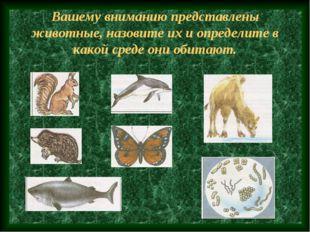 Вашему вниманию представлены животные, назовите их и определите в какой среде