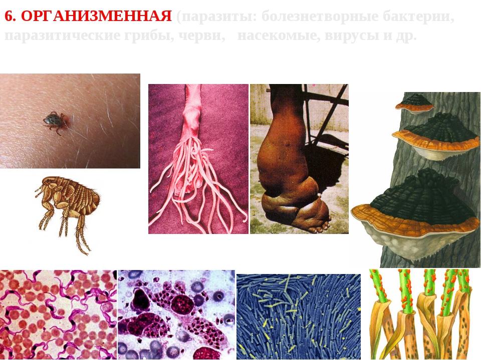 6. ОРГАНИЗМЕННАЯ (паразиты: болезнетворные бактерии, паразитические грибы, че...