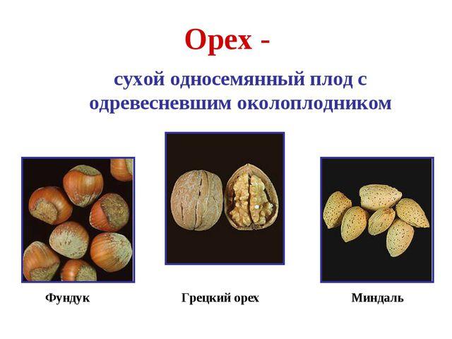 Орех - сухой односемянный плод с одревесневшим околоплодником Фундук Грецкий...