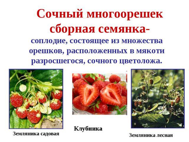 Сочный многоорешек сборная семянка- соплодие, состоящее из множества орешков,...