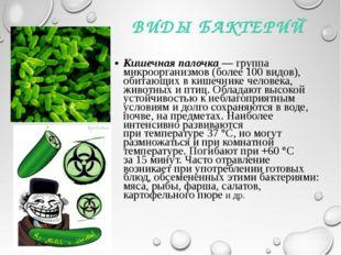 ВИДЫ БАКТЕРИЙ Кишечная палочка— группа микроорганизмов (более 100видов), об
