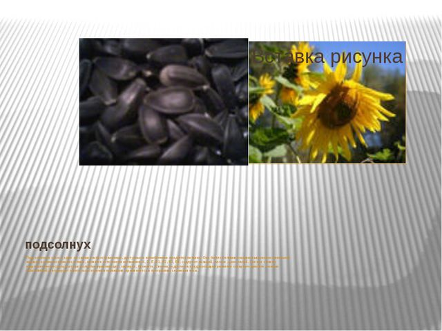 подсолнух Подсолнечное семя – один из самых распространенных, доступных и изл...