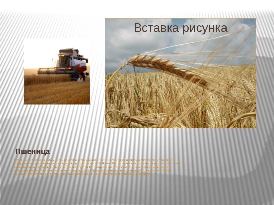 Пшеница Целебные свойства пшеницы очень ценили знахари Древней Руси. « Все вн...