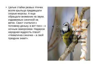 Целые стайки резвых птичек возле крыльца предвещали скорые морозы. А еще обра