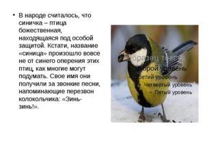 В народе считалось, что синичка – птица божественная, находящаяся под особой