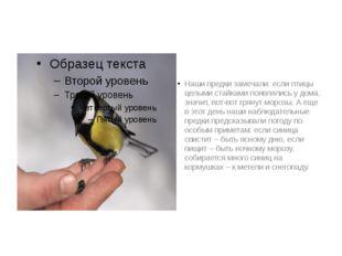 Наши предки замечали: если птицы целыми стайками появлялись у дома, значит, в