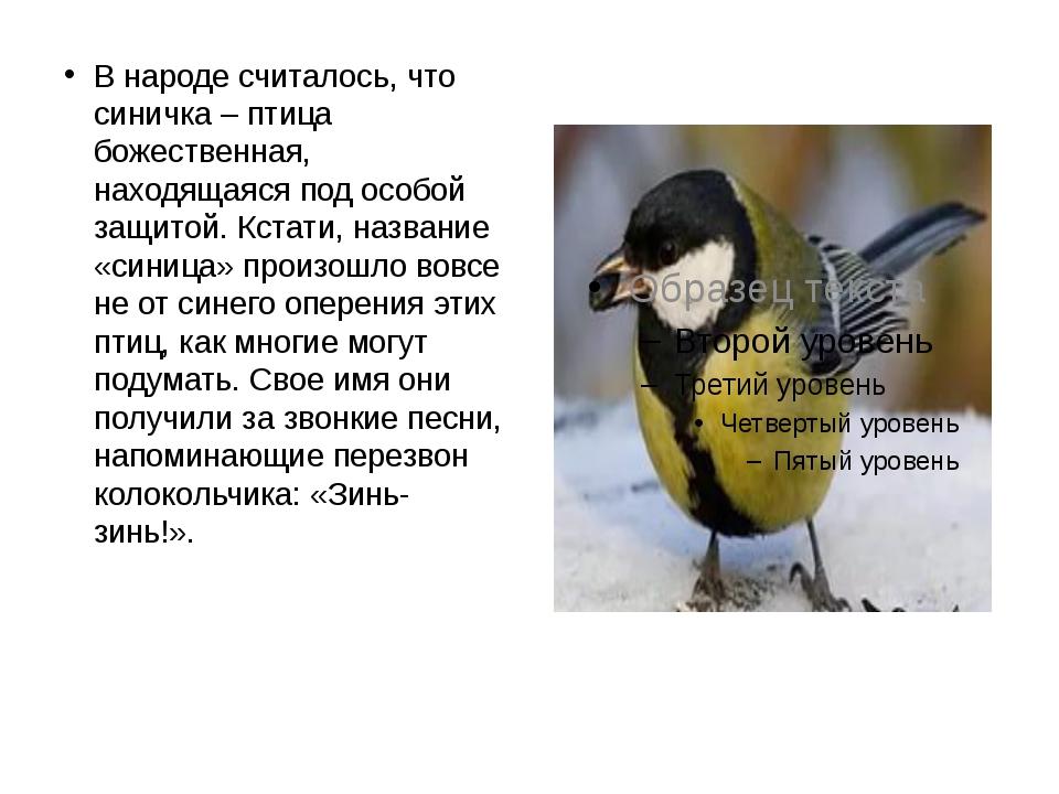 В народе считалось, что синичка – птица божественная, находящаяся под особой...