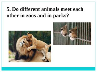 5. Do different animals meet each other in zoos and in parks?