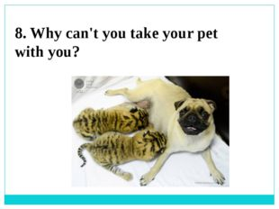 8. Why can't you take your pet with you?
