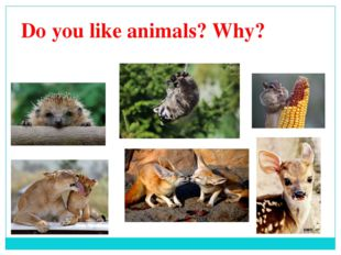 Do you like animals? Why?