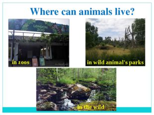 Where can animals live? in zoos in wild animal's parks in the wild