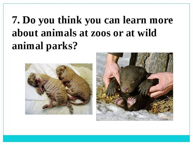 7. Do you think you can learn more about animals at zoos or at wild animal pa...