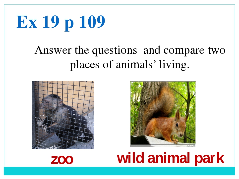 Answer the questions and compare two places of animals' living. Ex 19 p 109 z...