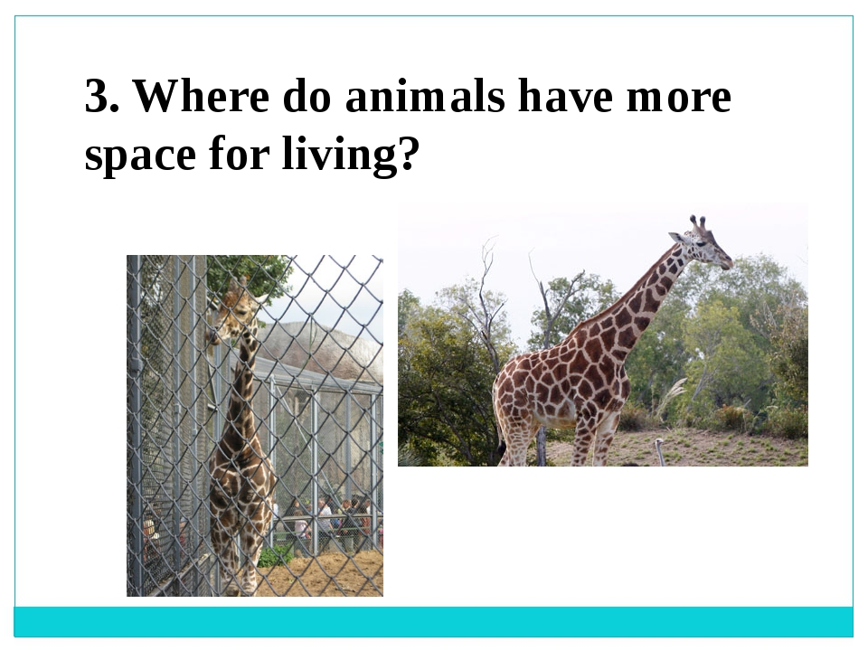 3. Where do animals have more space for living?