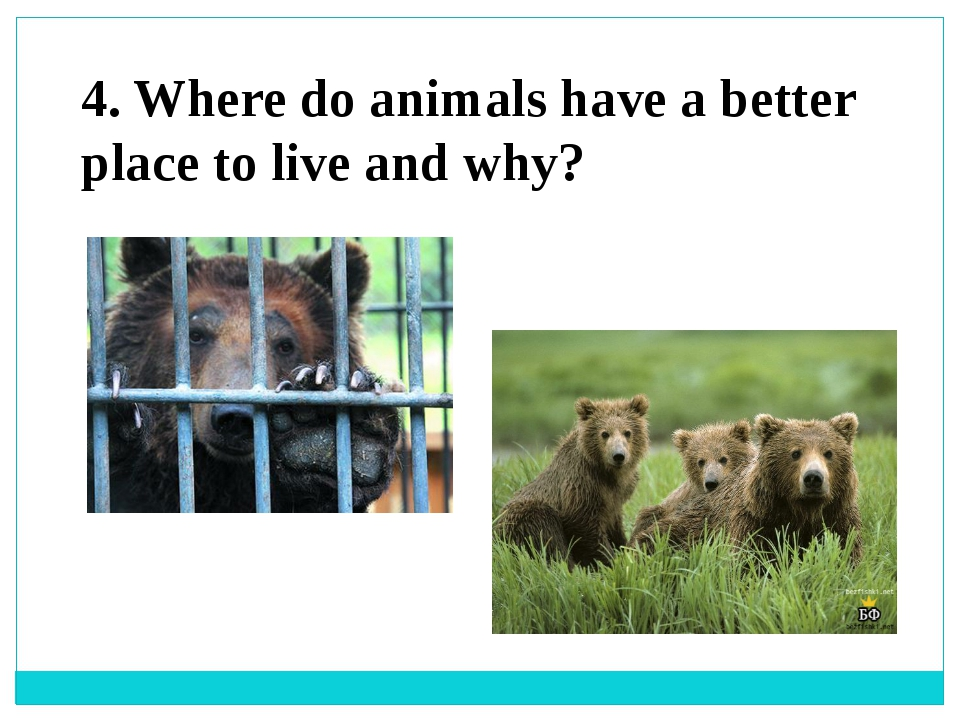4. Where do animals have a better place to live and why?