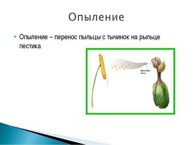 Опыление – перенос пыльцы с тычинок на рыльце пестика