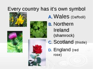 Every country has it's own symbol Wales (Daffodil) Northern Ireland (shamrock