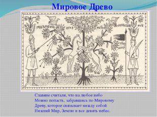 Мировое Древо Славяне считали, что на любое небо Можно попасть, забравшись по