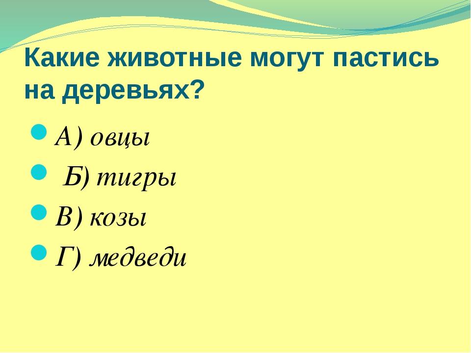 Какие животные могут пастись на деревьях? А) овцы Б) тигры В) козы Г) медведи