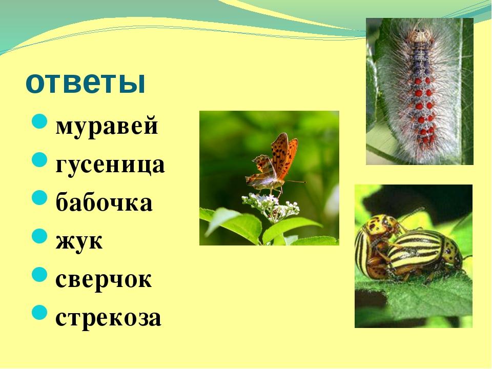 ответы муравей гусеница бабочка жук сверчок стрекоза