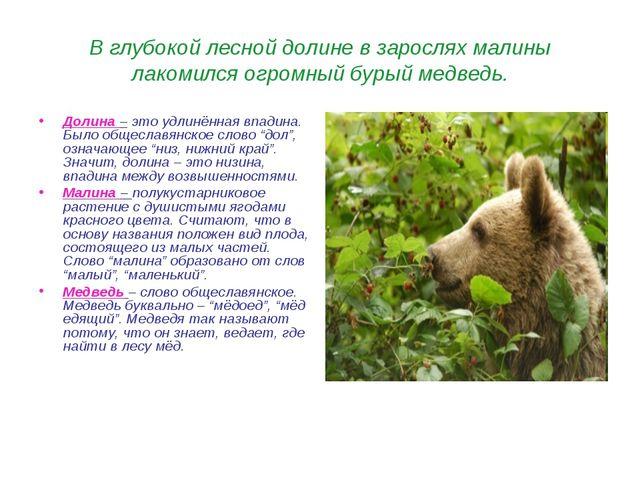 В глубокой лесной долине в зарослях малины лакомился огромный бурый медведь....