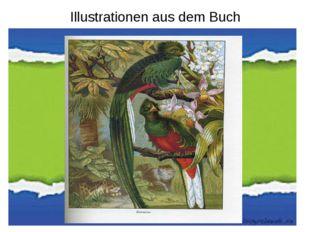Illustrationen aus dem Buch