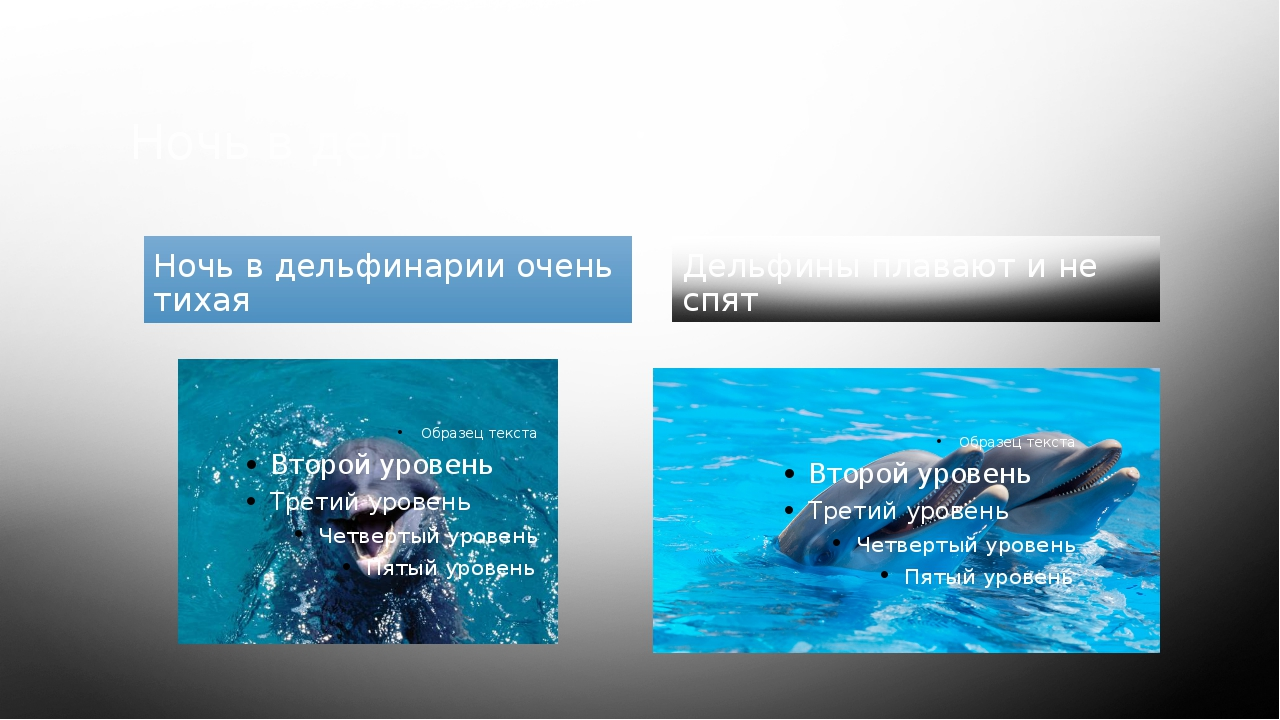 Ночь в дельфинарии Ночь в дельфинарии очень тихая Дельфины плавают и не спят