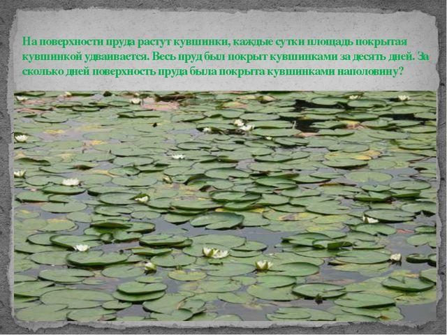 На поверхности пруда растут кувшинки, каждые сутки площадь покрытая кувшинко...