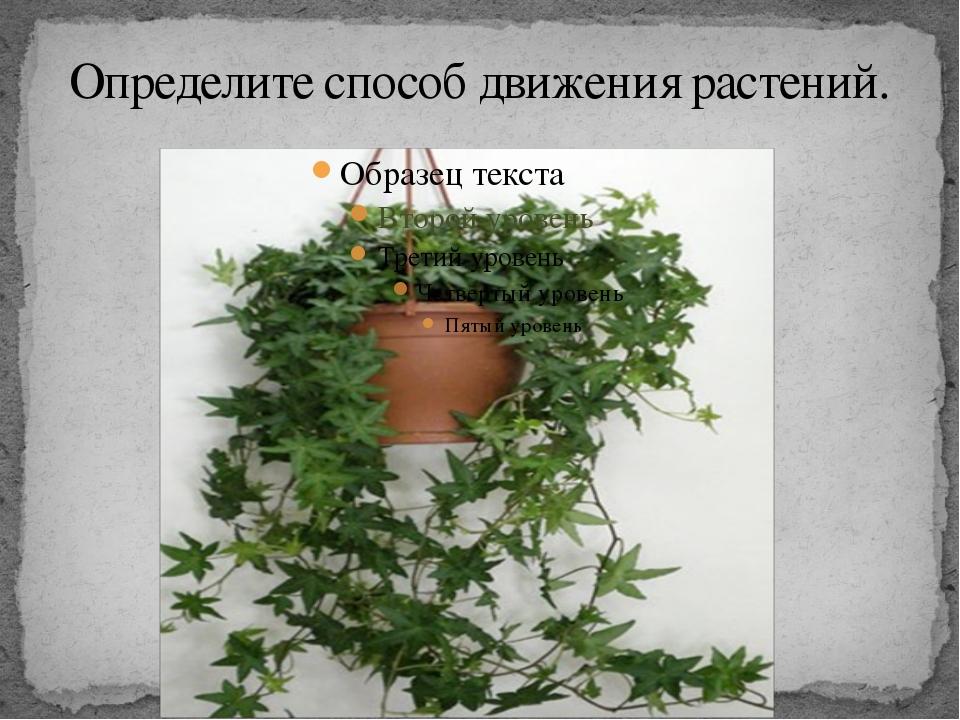 Определите способ движения растений.