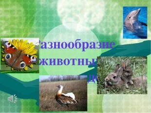 Разнообразие животных в природе