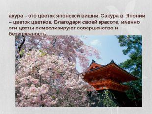 Сакура – это цветок японской вишни. Сакура в Японии – цветок цветков. Благода