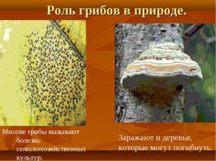 Роль грибов в природе. Заражают и деревья, которые могут погибнуть. Многие гр